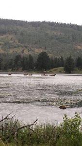 Elk Crossing Sprague Lake